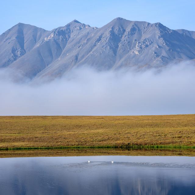 """Swans Beneath the Fog"" stock image"