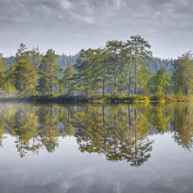 """Fog autumn lake"" stock image"