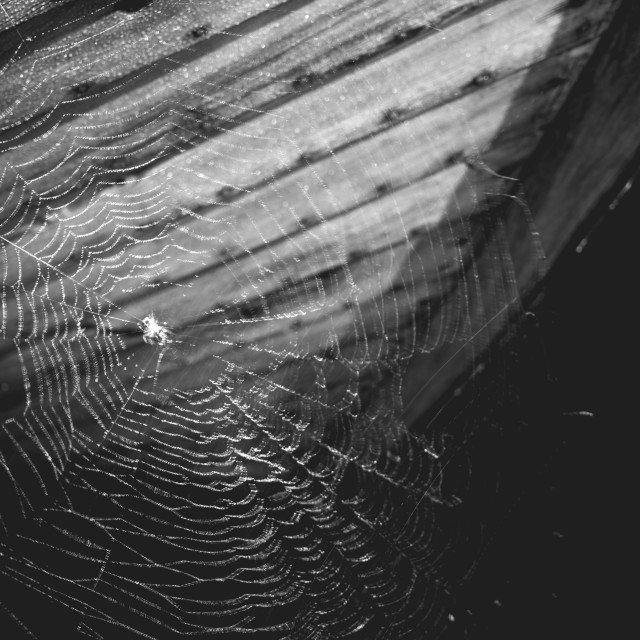 """""""Spider Web And Boat"""" stock image"""