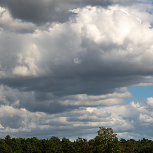 """""""Clouds over the woods"""" stock image"""