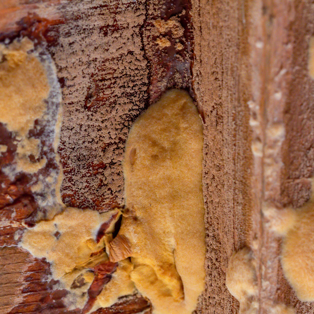 """""""Wood mould inside a garden shed"""" stock image"""