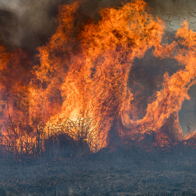 """Forest brush grass wild fire flames burning prescribed burn glob"" stock image"