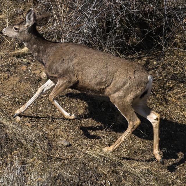 """Deer running up a hill"" stock image"