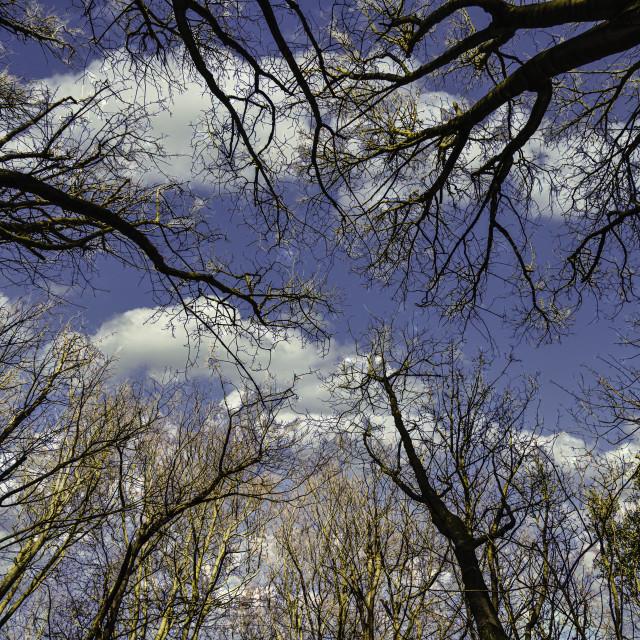 """Winter Trees"" stock image"