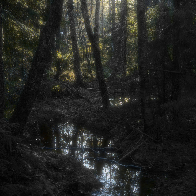 """Fangorn Forest"" stock image"