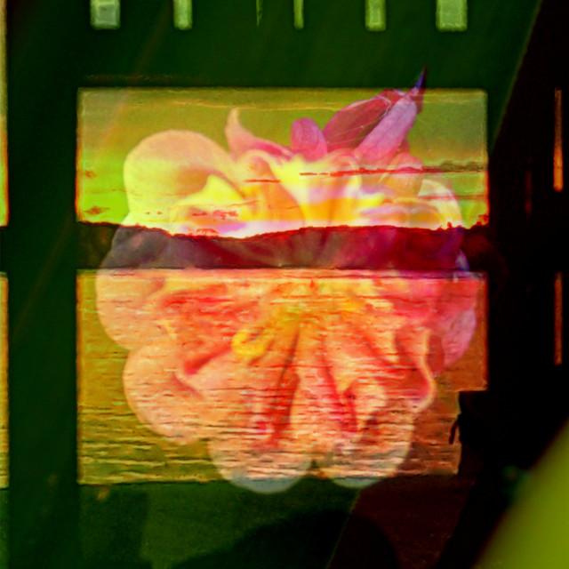 """""""Flower lantern"""" stock image"""