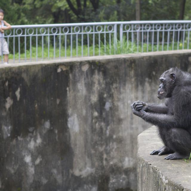 """""""Pyongyang Zoo"""" stock image"""