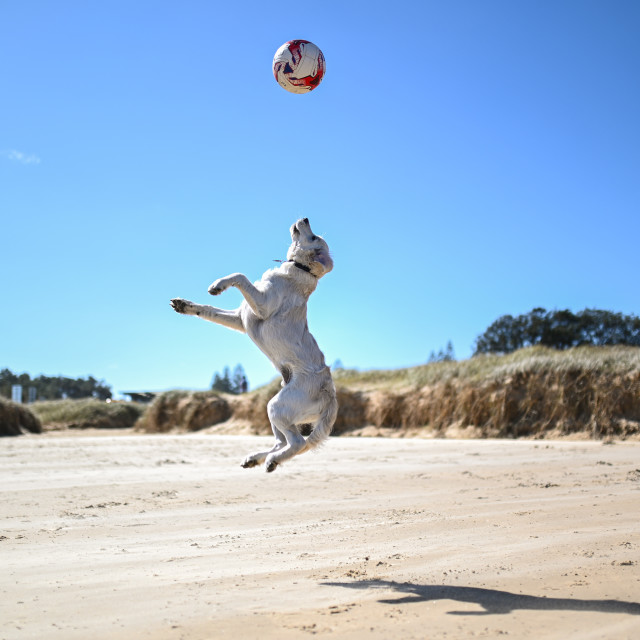 """Jump dog"" stock image"
