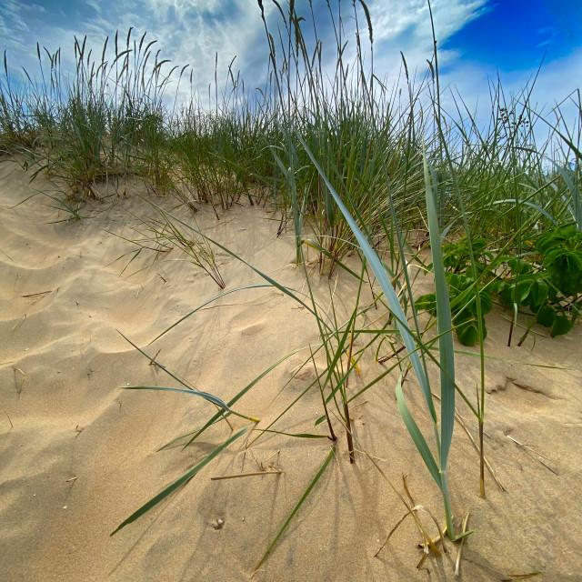 """Summer Dunes"" stock image"