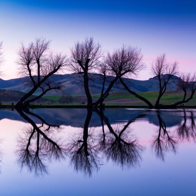 """Twilight Dancing Trees"" stock image"