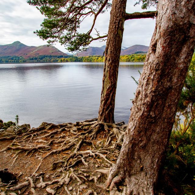 """Scenic View of Lake Derwentwater, Cumbria, England. Portrait Orientation."" stock image"
