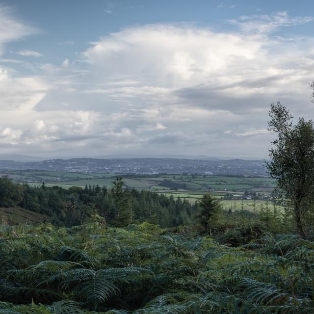 """Haldon Forest"" stock image"