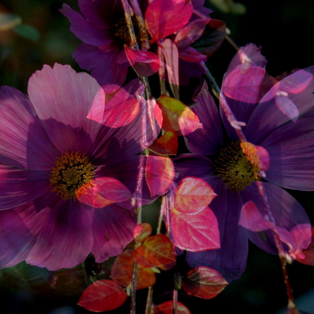 """""""Autumn purple, red & pink"""" stock image"""