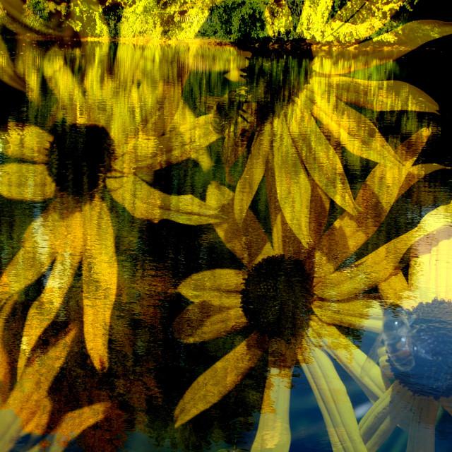 """Yellow reflection"" stock image"