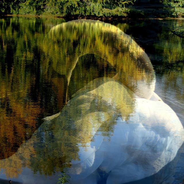 """""""Swan-lake"""" stock image"""