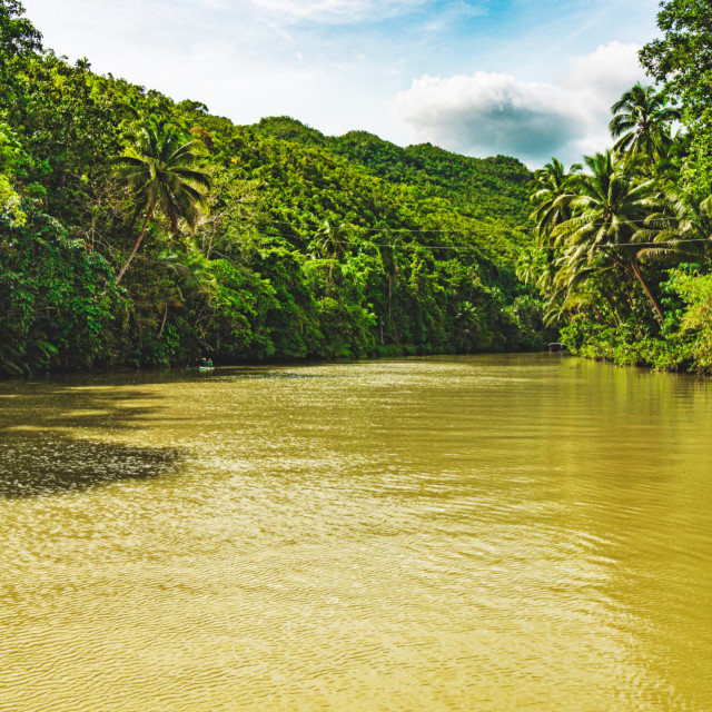 """The Jungle Rivers of Bohol Amid The Forest - The Philippines, Asia"" stock image"