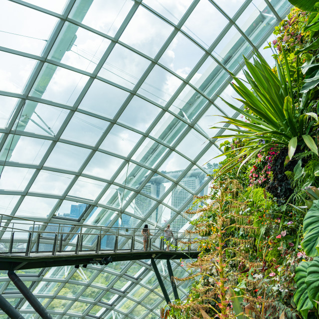 """""""Cloud Forest at the Gardens by the bay"""" stock image"""
