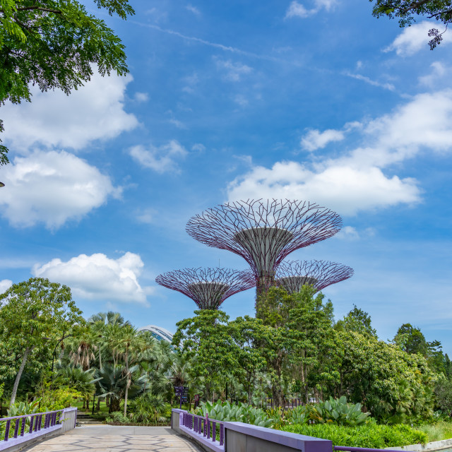 """""""The super trees at the gardens by the bay"""" stock image"""