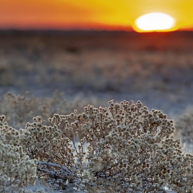 """""""Kalahari sunset"""" stock image"""