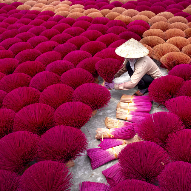 """""""Traditional village workers of Ung Hoa incense are doing the incense drying process"""" stock image"""