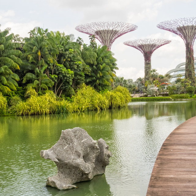"""Dragonfly Lake - Singapore"" stock image"