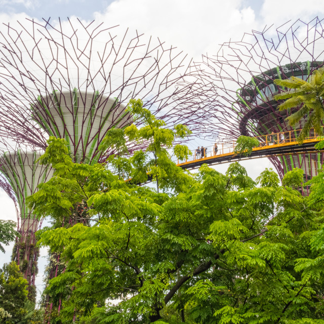 """Supertree Grove - Singapore"" stock image"