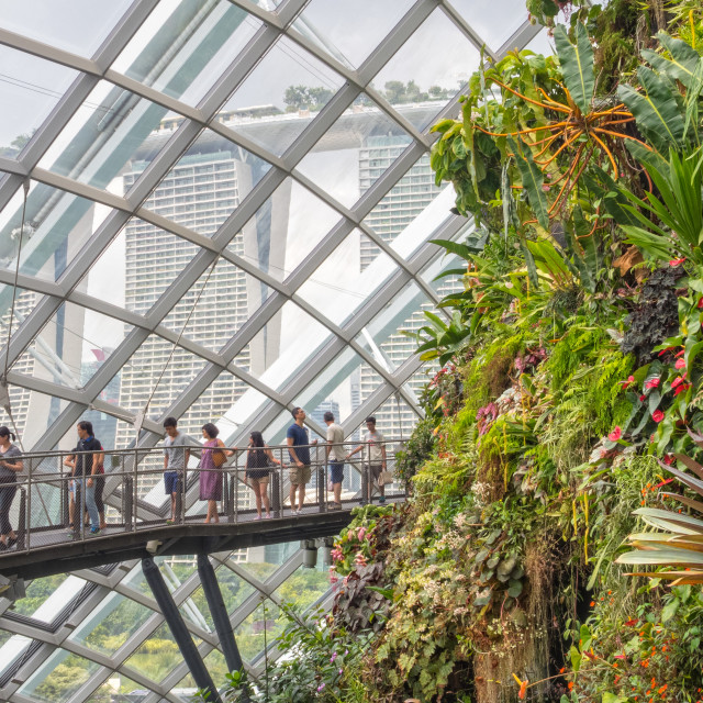 """In the Cloud Forest - Singapore"" stock image"