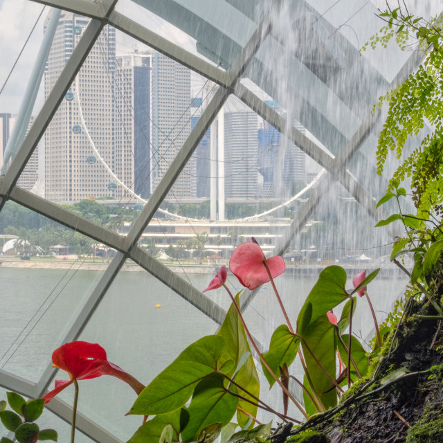 """View from Cloud Forest - Singapore"" stock image"