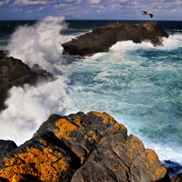 """""""Southerly Swell"""" stock image"""