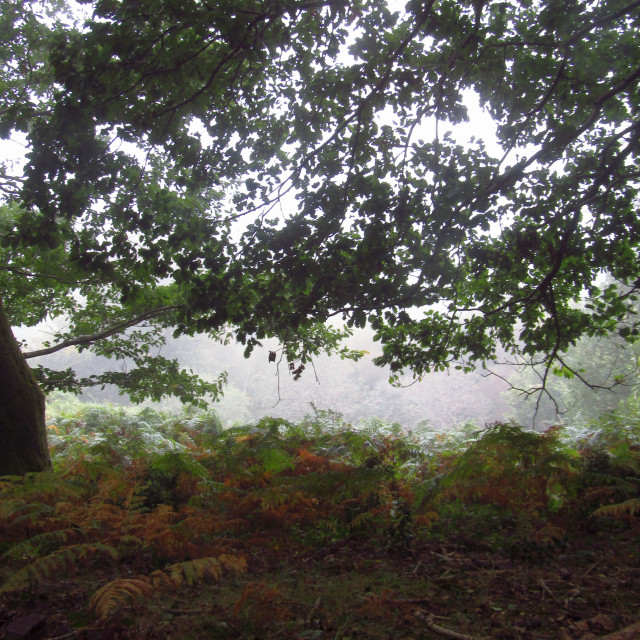 """Cloudy Quantock Hills"" stock image"
