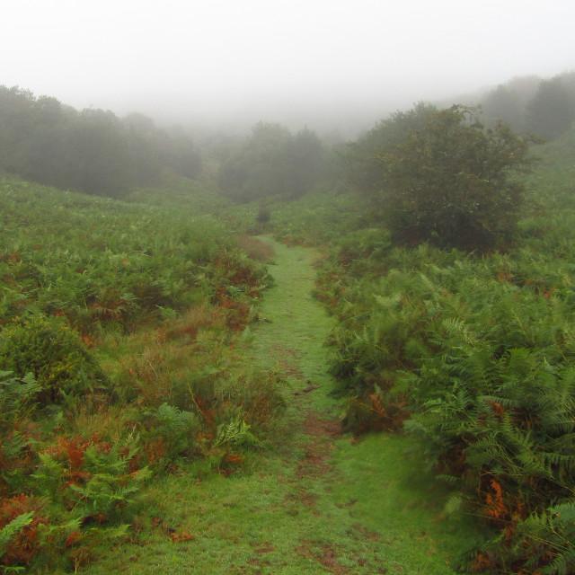 """""""Scenic Quantock Hills trail"""" stock image"""