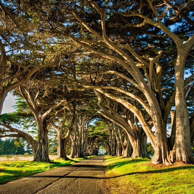 """Cypress Tree Tunnel"" stock image"