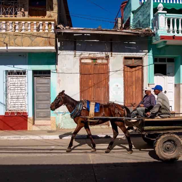 """Horse in Trinidad"" stock image"
