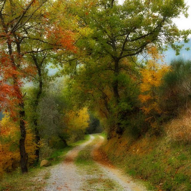 """Cortona autumn woods"" stock image"