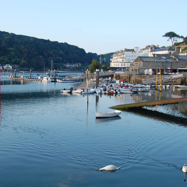"""Dawn Swans at Salcombe"" stock image"