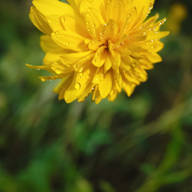 """Come Close (Yellow Flower)"" stock image"