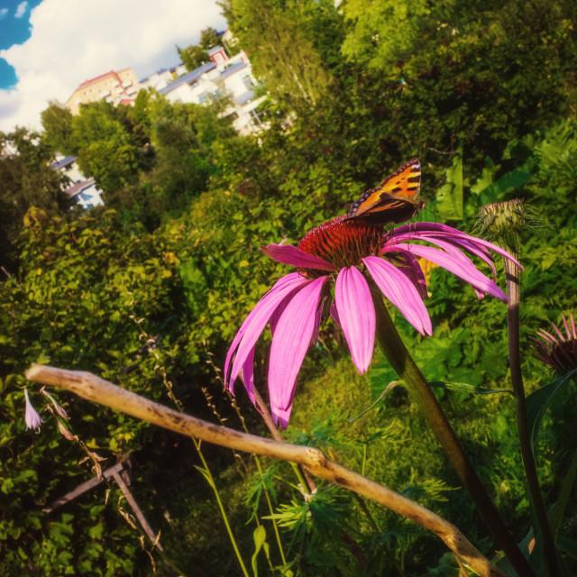 """""""Autumn Garden Pispala"""" stock image"""