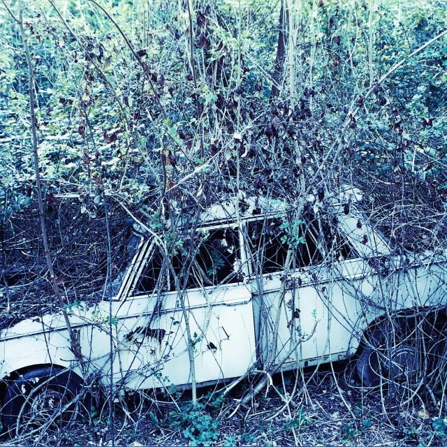 """Fiat 1300 devoured by brambles"" stock image"