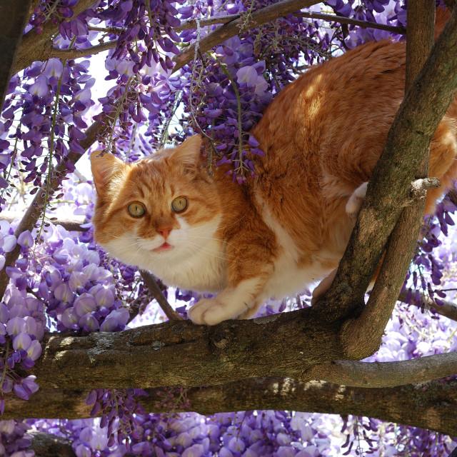 """The Cheshire Cat"" stock image"