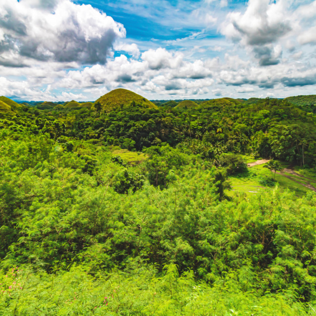 """The Chocolate Hills of Bohol In The Summer - The Philippines, Asia"" stock image"