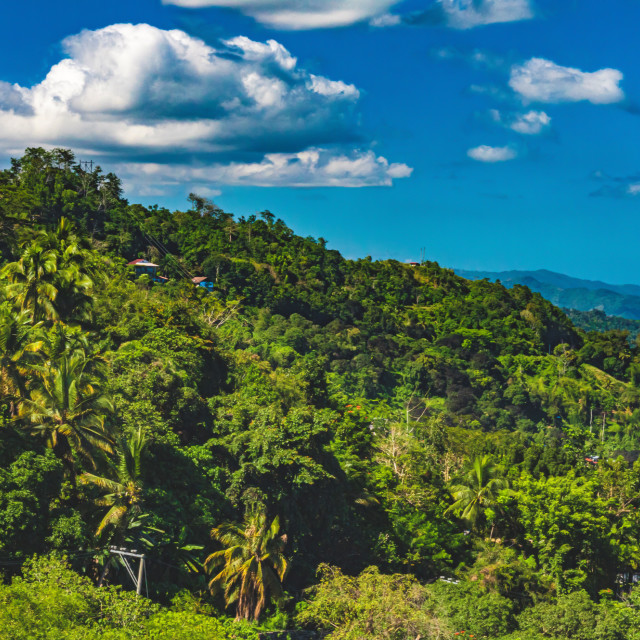 """The Lush, Green, Tropical Forests of The Philippines In The Summer"" stock image"