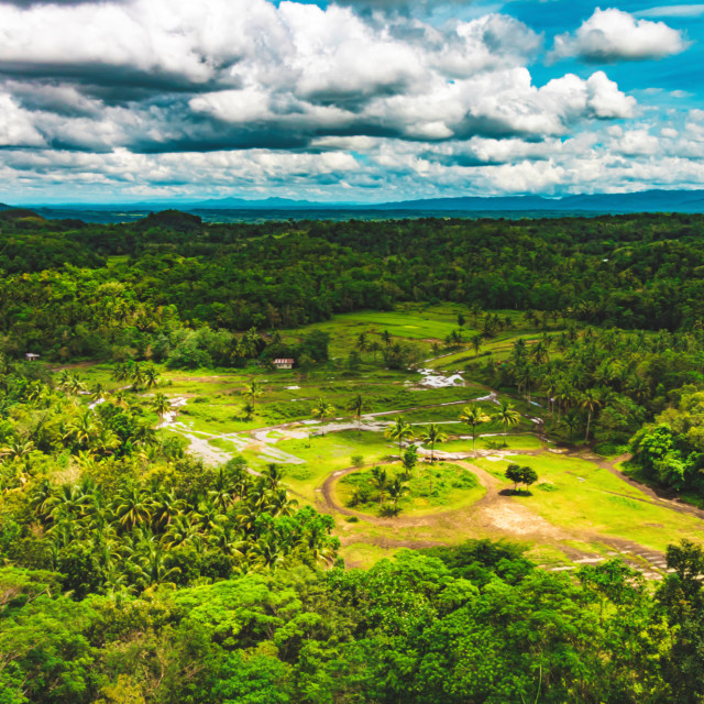 """Lush Green Jungles of Bohol - The Philippines"" stock image"
