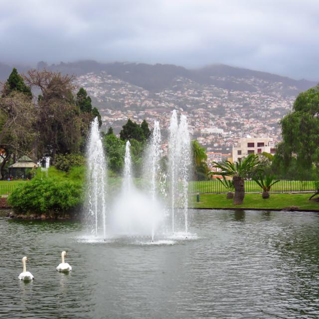 """""""Funchal"""" stock image"""
