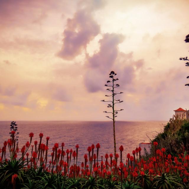 """Madeira sunset"" stock image"