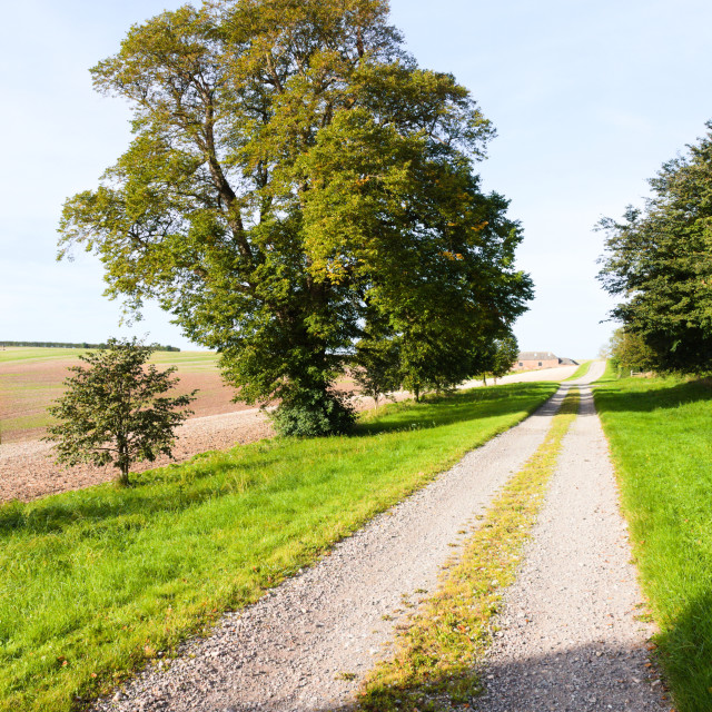 """""""Country track lined with grass and trees"""" stock image"""