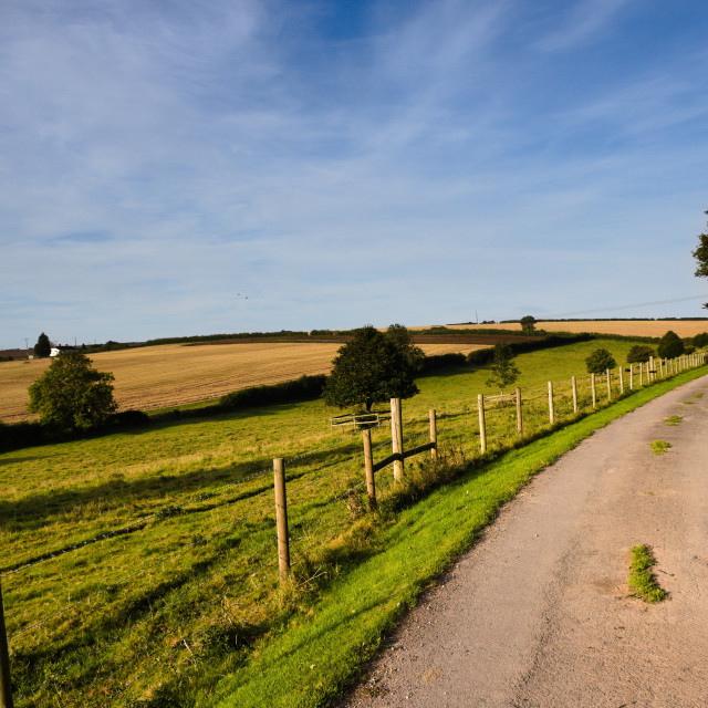 """View of fields from a tree lined country track"" stock image"