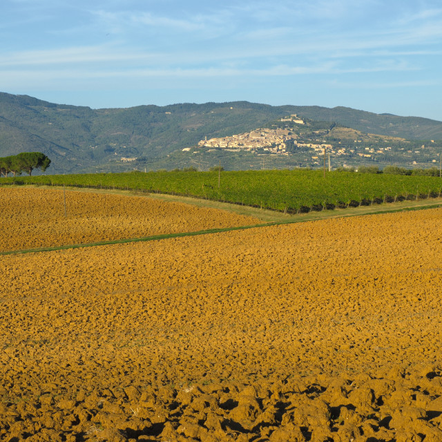 """Cortona view from Montecchio"" stock image"