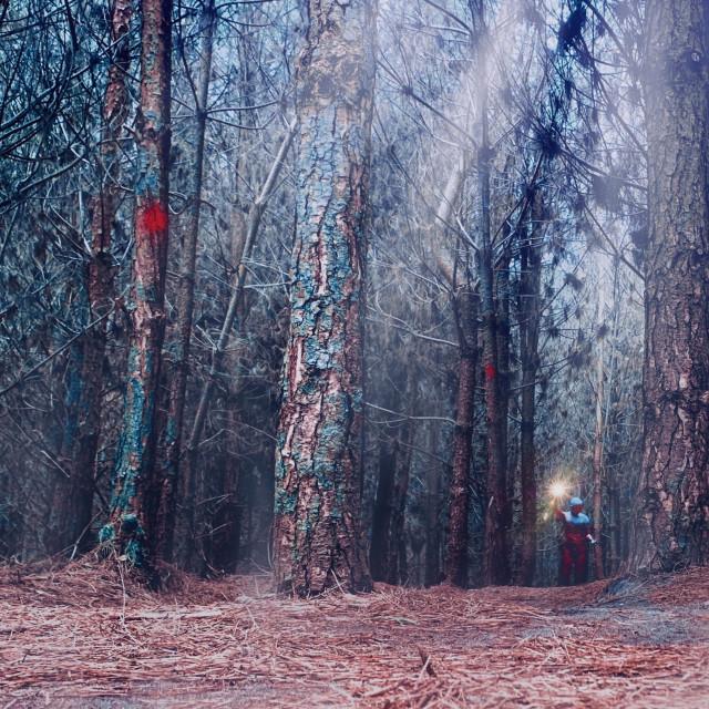 """High Lodge, Thetford Forest, Brandon UK."" stock image"