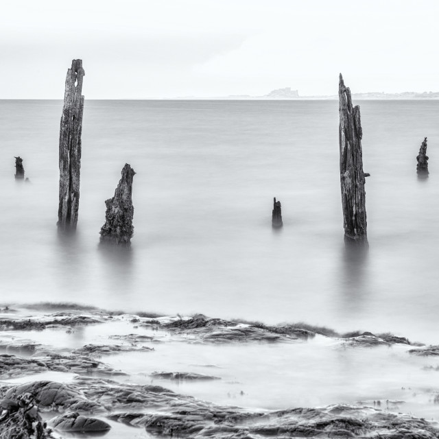 """""""Old Posts, Rocks and a view of Bamburgh Castle through the mist."""" stock image"""
