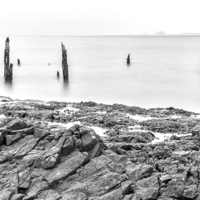 """""""Old Posts at Lindisfarne - wide view."""" stock image"""